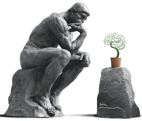 Piante: altro che stupide, sono organismi intelligenti ed evoluti