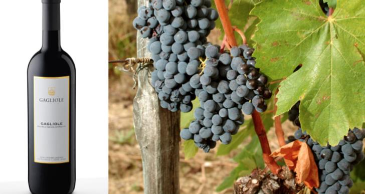 Gagliole 2011:  un racconto di Sangiovese tra Castellina e Panzano in Chianti