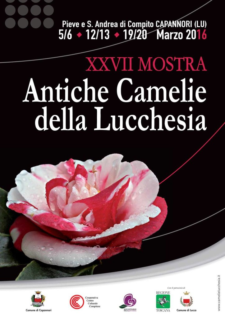 Camelie Lucchesia5