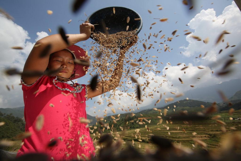 Luca Bracali Harvest time
