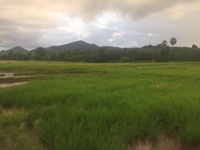 phuket-panorama