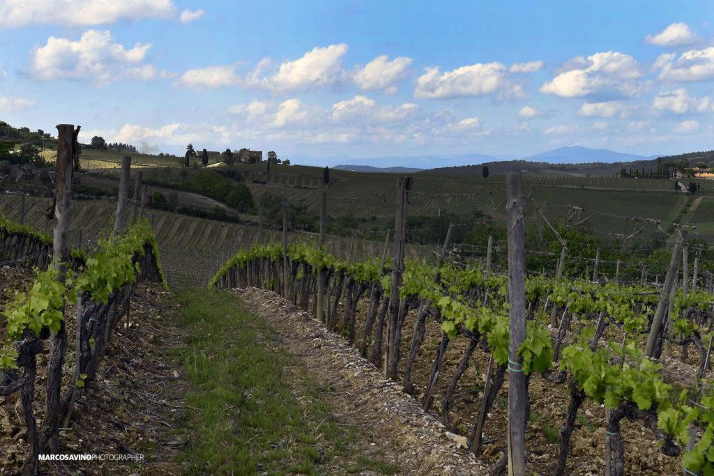 Borgo del Cabreo, relais di charme, la vista sulla vigna