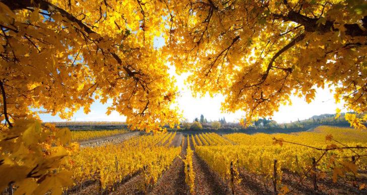 Soggiornare in camper tra le vigne del Chianti Classico