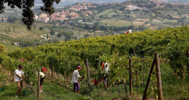 Vernaccia, a San Gimignano l'Anteprima 2018